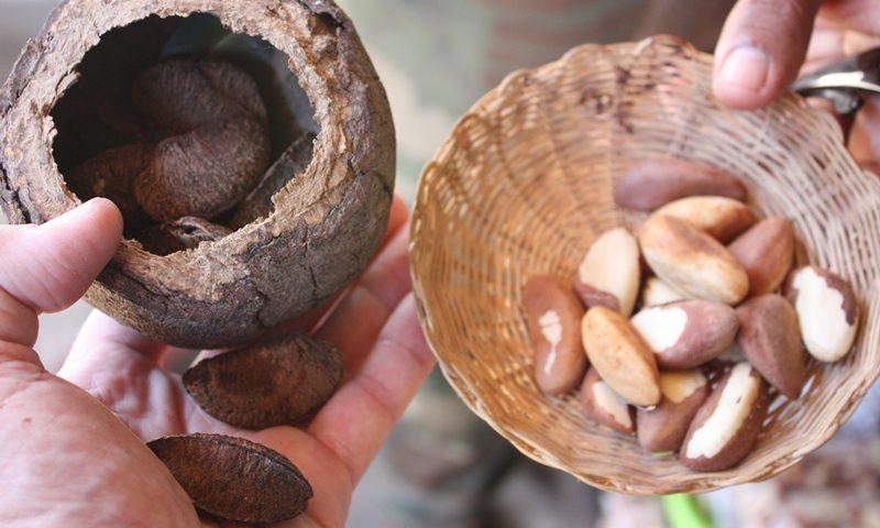 brazil nuts supplier