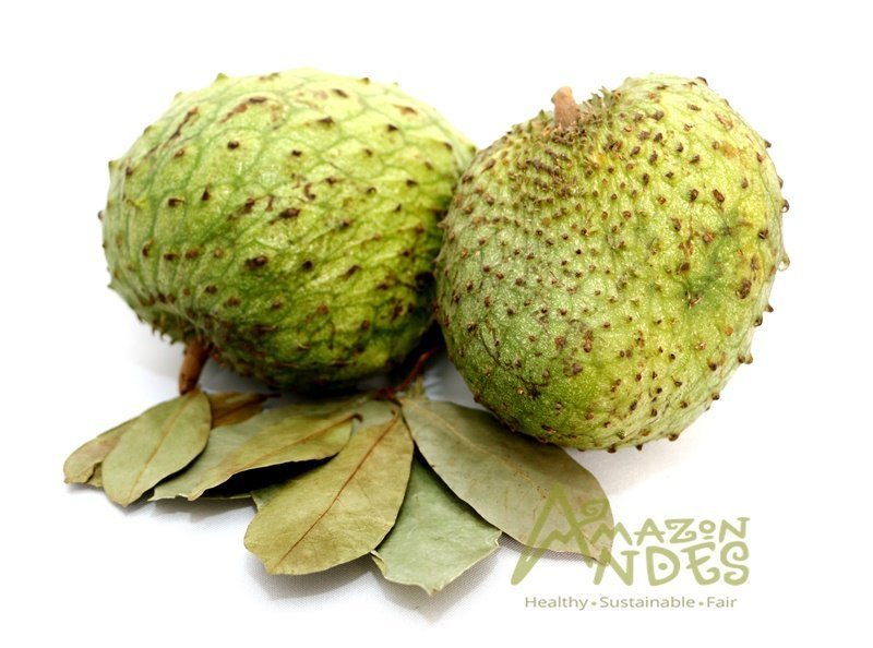 graviola or soursop