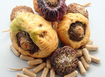 maca product