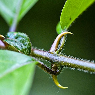 cat's claw bark and powder supplier